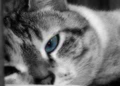 Kittie Kittie (jenover2010) Tags: cats pets kitties cutepetspicnik