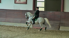 "Lipizzaner Dressage • <a style=""font-size:0.8em;"" href=""http://www.flickr.com/photos/64637277@N07/5890906092/"" target=""_blank"">View on Flickr</a>"