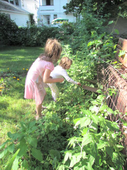 Kids Picking Black Raspberries