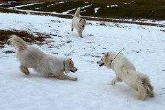 """The Chase Race 6, Now The Confrontation With Princess Looking To Get In On The Mix • <a style=""""font-size:0.8em;"""" href=""""http://www.flickr.com/photos/96196263@N07/14199322302/"""" target=""""_blank"""">View on Flickr</a>"""