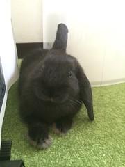 new family ! (gaspard9614) Tags: rabbit bunny conejo lapin usagi miniusagi