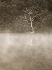 lindores loch tree in mist-7012587 (E.........'s Diary) Tags: june misty scotland ross fife olympus swans eddie loch newburgh 2014 lindores e620