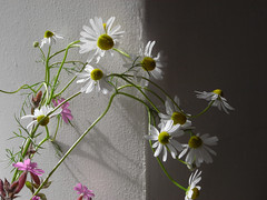 flowers in light (the incredible how (intermitten.t)) Tags: light weeds shade wildflowers 23697 20140616