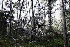 Off_Trail I (Joe Josephs: 2,861,655 views - thank you) Tags: nature hiking naturephotography outdoorphotography fiscaliniranch fiscaliniranchpreserve joejosephs joejosephsphotography copyrightjoejosephsphotography copyrightjoejosephs2014