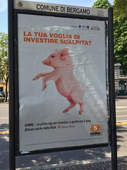 Bergamo - A piglet with little wings like an angel. (arwed.kubisch1) Tags: bergamo italia italy italien maiale porco porcellino pig piglet shoat schwein ferkel poster placard plakat angelo amore angel engel testimonial werbeträger