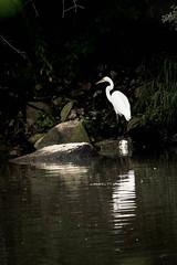 lake katherine area. july 2016 (timp37) Tags: lake katherine july 2016 illinois cal sag bird worth palos