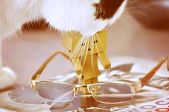 64/365 - Journey  with Danbo -  welcome my little friend:-))) (eggii) Tags: cat maniek project 365 project365 danbo friend journeywithdanbo
