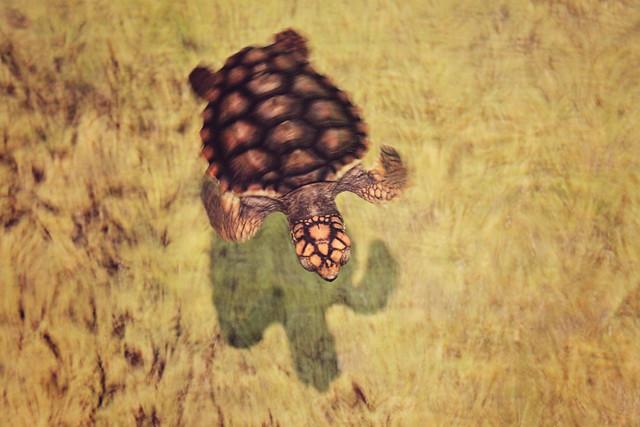 MODS turtle 6