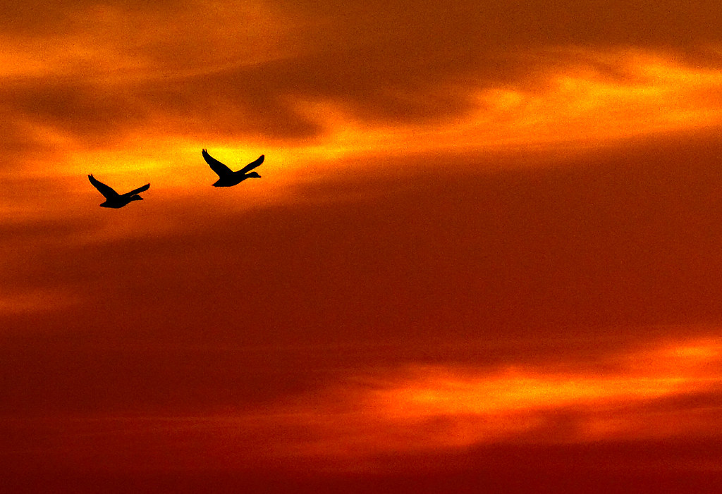 Freedom - Jo Hum Dono Panchhi  Hote