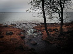 Murky creek waters (Genevg) Tags: sea beach water creek dark stream russia rainy saintpetersburg murky gulfoffinland peterhof petrodvorets   petergof suomenlahti