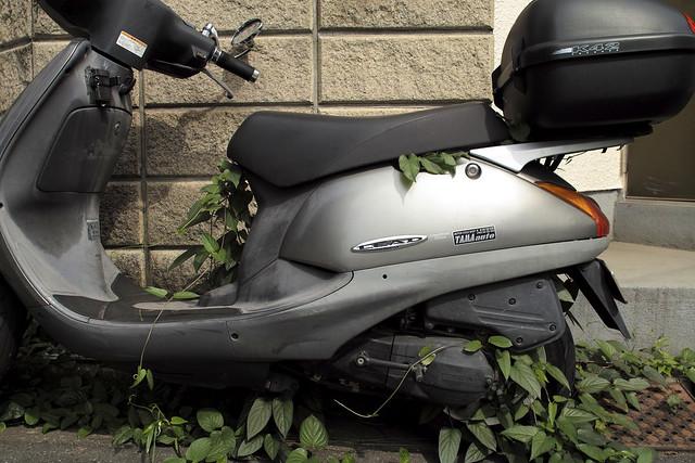 SDIM0520