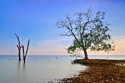 Tiap Yang Hidup Pasti Akan Mati by Arief Rasa