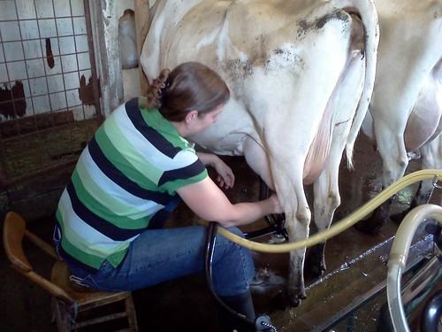 genevieve milking