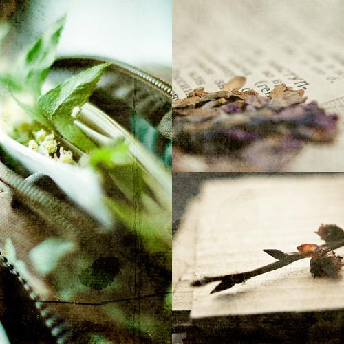 botanicum bag story