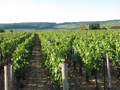 Champagne vineyards near Epernay, France by makingamark2