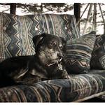 Porch Swing dog thumbnail