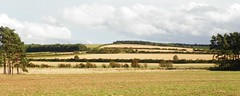 Fields (Martha-Ann48) Tags: village view north yorkshire trees fields grass fences hedges rillington sky clouds