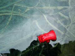 nadando en Plitvice (chochera7) Tags: plitvickajezera plitvickawaterfalls plitvicenationalpark toy stuffedtoy swimming lake color red