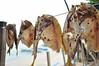 Buwad (Gerard Theodore) Tags: driedfish dangit buwad