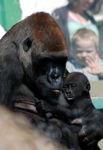 Primates & Parents