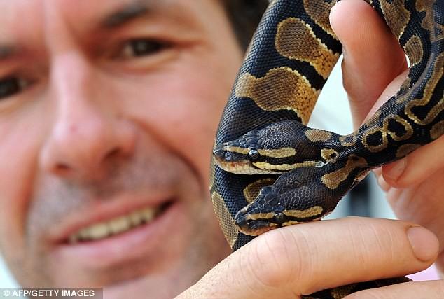 snake 3