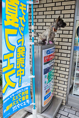 Barking Dog on a Sign, Tokyo (tokyofashion) Tags: dog strange sign japan shop japanese tokyo weird store conveniencestore conbini combini 2011