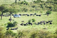 "PhotoFly Travel Club Kenya Safari 2011! • <a style=""font-size:0.8em;"" href=""http://www.flickr.com/photos/56154910@N05/5893006738/"" target=""_blank"">View on Flickr</a>"