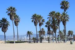 Beachin Palm Trees (ToGa Wanderings) Tags: california blue venice trees summer sky usa west beach photography coast los sand angeles culture palm american