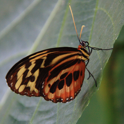 Yellow Orange and Black Butterfly