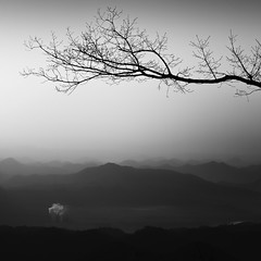 smoke signals (StephenCairns) Tags: morning blackandwhite bw mountain tree japan clouds branch smoke     gifu  motosu    canon50d 70200mmf4isusm mountainlayers 50dcanon  motosucity