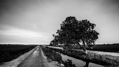 Sekinchan Selangor in B&W (MOG'S) Tags: blackandwhite bw tree canon landscape rice paddy tan drain lee malaysia minimalism ricefield minimalist squarecrop dong paddyfield selangor mogs 1635 sekinchan lonesometree leefilter malaysialandscape 1635f28 1635f28ii donnietphotography donniephotography dongphotography tanjenndong tanjenndongphotography landscapemalaysia donglandscape malaysialandscapespot