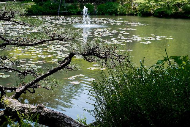 Botanical Garden 05