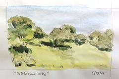 California Oaks (jimblodget) Tags: california trees moleskine watercolor landscape sketch oak