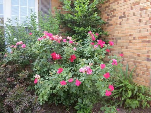 Khu vườn của Na - Page 5 5804466636_588f7b96b9