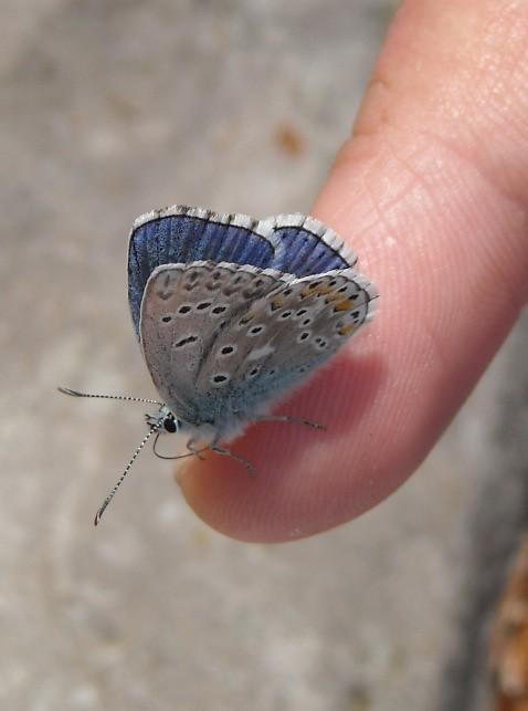 l'amica farfalla ^_^