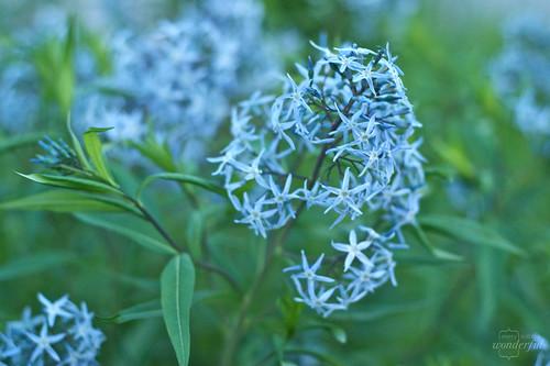DuskWildflowers