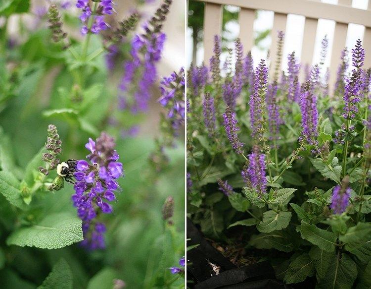 06-09-garden1
