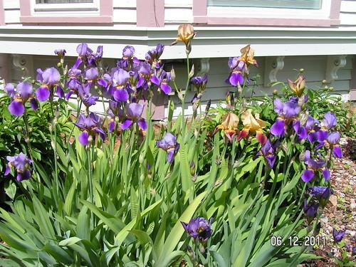 Inn iris (5)