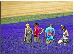Scent and colours of summer (Nespyxel) Tags: flowers people france field landscape four colours 4 lavender persone campo provence fiori francia lavanda valensole tripes striscie nespyxel stefanoscarselli