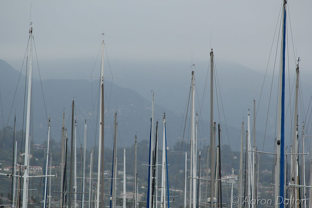 Masts in the Harbor