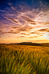 Dramatic Sunset over Dorset (paulwynn-mackenzie.co.uk) Tags: blue sunset portrait sky sun slr yellow clouds photoshop landscape photography golden nice saturated warm view vibrant wheat