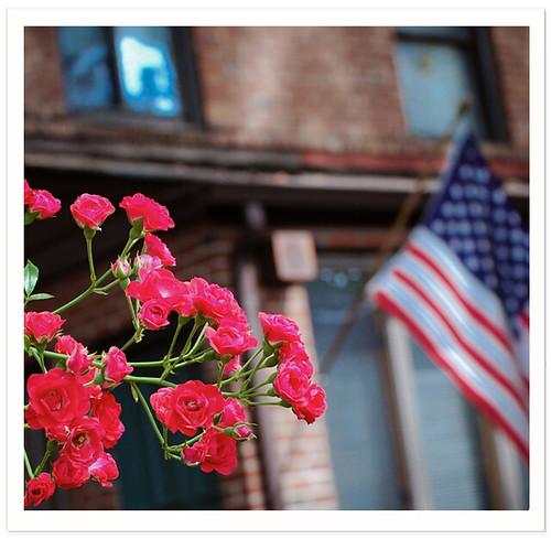 Flag & Roses