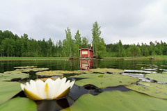 Sauna (Aspiriini) Tags: sky lake water landscape koivu birch sauna maisema vesi lowperspective järvi lumme taivas salajärvi koivut lumpeet jonilehto aspiriini