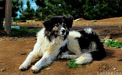 Perrito en punta de lobos (Takk Heima Fotografia) Tags: chile de sexta perro punta lobos region rancagua pichilemu