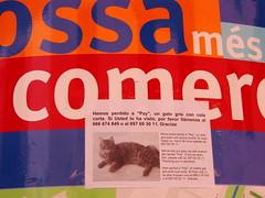 gat perdut (Joan Pau Inarejos) Tags: gato felino catalunya costabrava mediterrneo tossa cartel curiosidades sebusca tossademar laselva bsqueda localizar provinciadegirona tossademarmayo2012