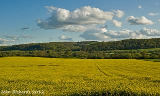 Fields of Gold, Sky of Blue.