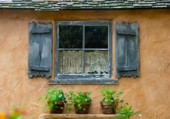 JKN©-BW-0758 (John Nakata) Tags: plants window shutter bw9