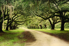 The Oaks (Tina Lee Studio) Tags: road trees green sc moss oak path spanishmoss dirtroad treelined florabella