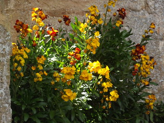 Sudeley Castle & Gardens - Tithe Barn - yellow...