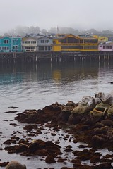 image (Eva O'Brien) Tags: ocean california boat monterey nikon pacific whales killerwhale killerwhales whalewatching d3100 nikond3100 evacares evaobrien